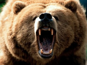 RMHS Grizzly