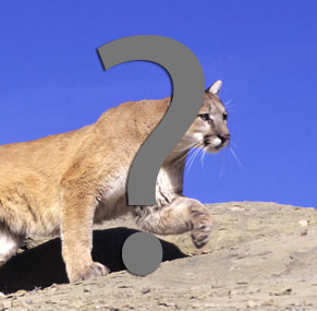 Was it a mountain lion?