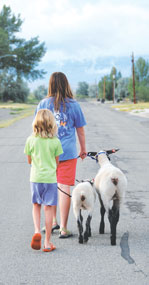 Dusty Miller and TaiLyn Miller take their 4-H lambs for a walk on a leash in the town of Cowley.