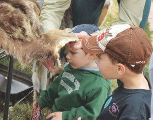 Bridger Pederson and Landon Hatch examine a pelt shown by the U.S. Forest Service during the Lovell Earth Day Festival on April 20.