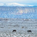 Photo of Sheep Mountain and wild horses