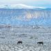 Photo of Sheep Mountain and wild horses
