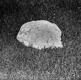 June-2-66-Turtle-Fossil001